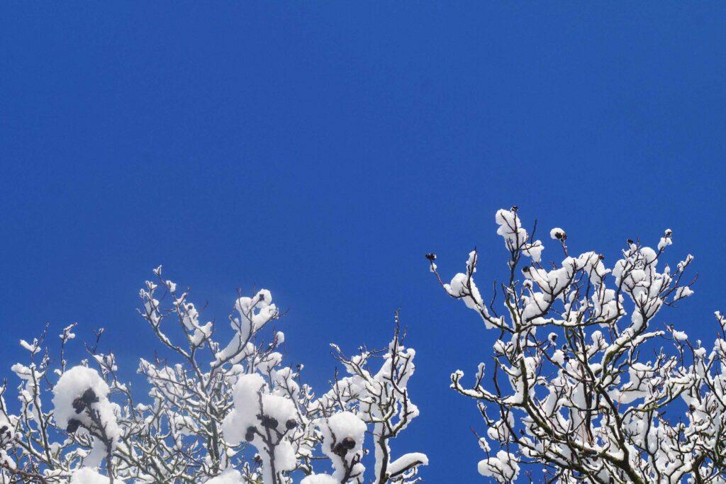 Auszeit, Verschneite Zweige vor blauem himmel