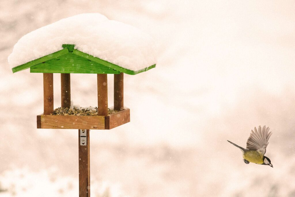 Vögel füttern – so klappt es richtig