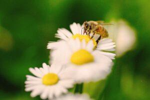 Insektensterben – warum wir auf die kleinen Helfer nicht verzichten können