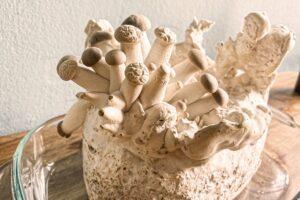 So einfach kannst du Pilze selber züchten