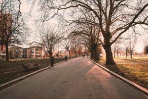 Stadtbäume sind gute Helfer gegen Depression