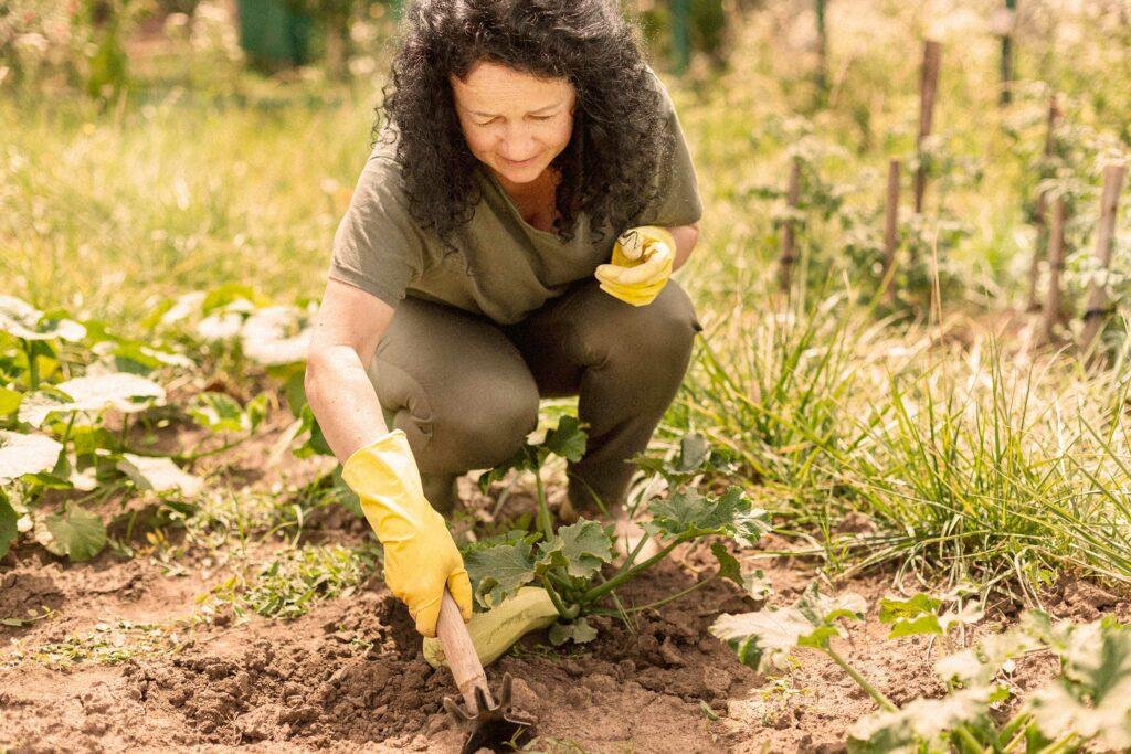 Eine Frau erntet regionales Gemüse im Garten