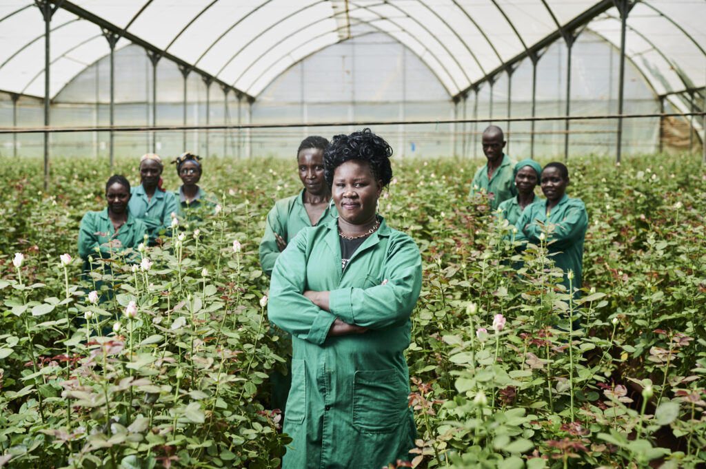 Rosenanbau in Kenia – Fairtrade
