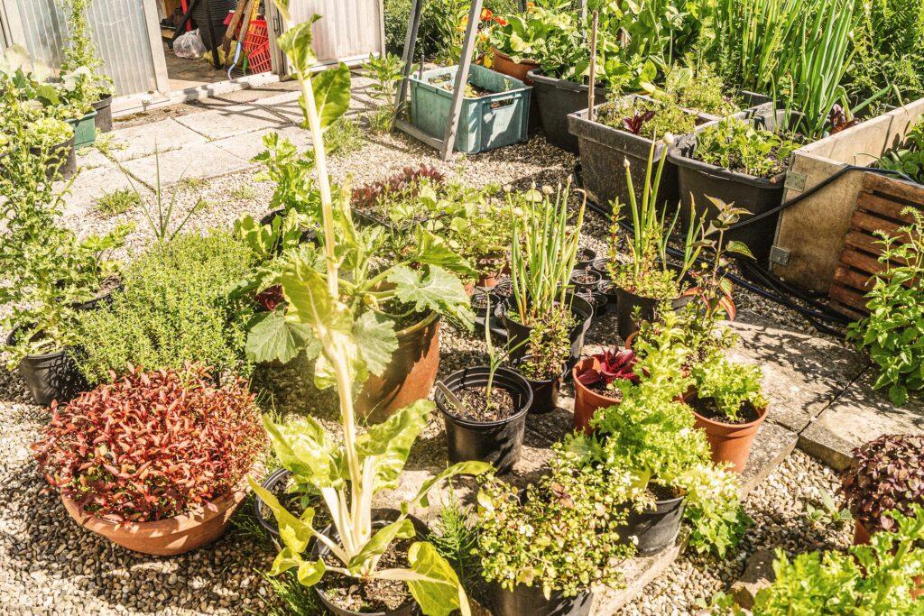 Viele Töpfe in Gabriele Stolls Garten